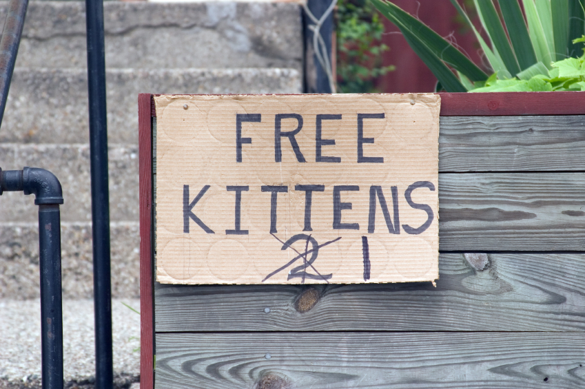 Free Kittens Sign