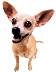 Taco Bell's humorous chihuahua advertising campaign