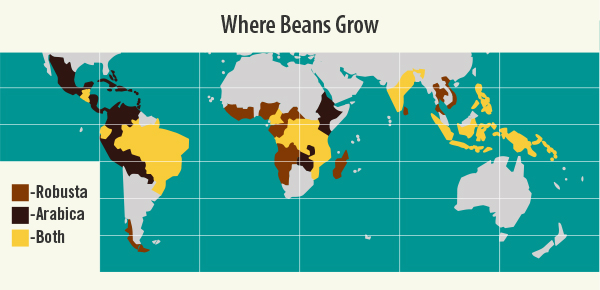 Where Arabica and Robusta Coffee Are Grown