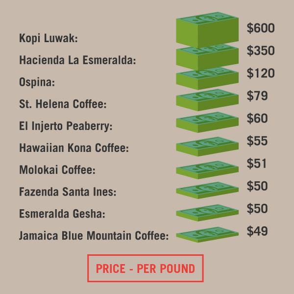 Top 10 Most Expensive Coffee Beans in the World